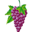 The Poulsard varietal wine grape