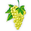 The Vidal Blanc varietal wine grape